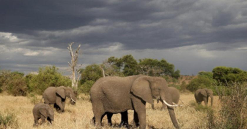 African Bush, Serengeti, Kenya, Botswana, Thanda Safari