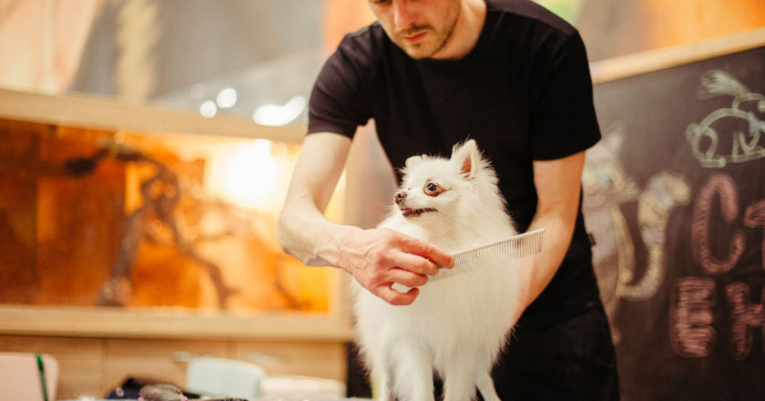 Manage Your Pet Grooming Salon, Easy appointment booking, Manage inventory, Pet Grooming Salon, Pet Grooming Salon Software