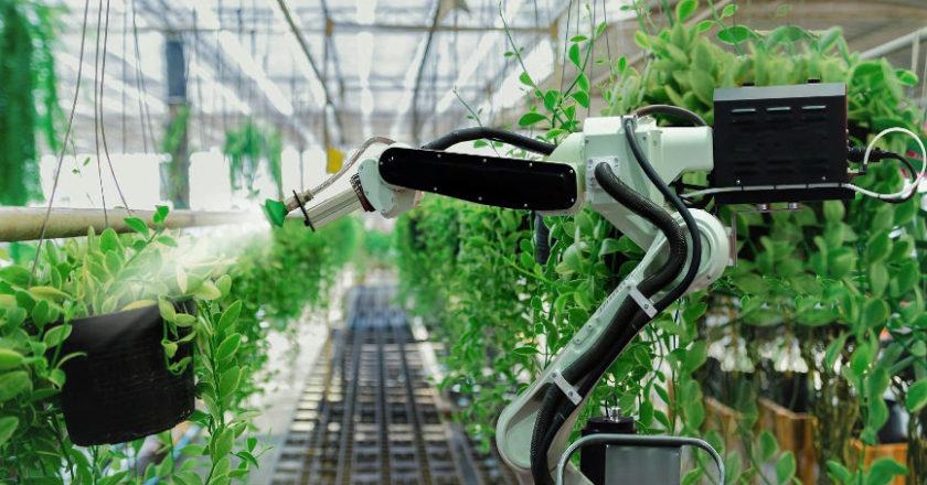 Technologies in Agriculture, Computer Vision, Deep Learning, Crop and Soil Monitoring, stress levels in plants