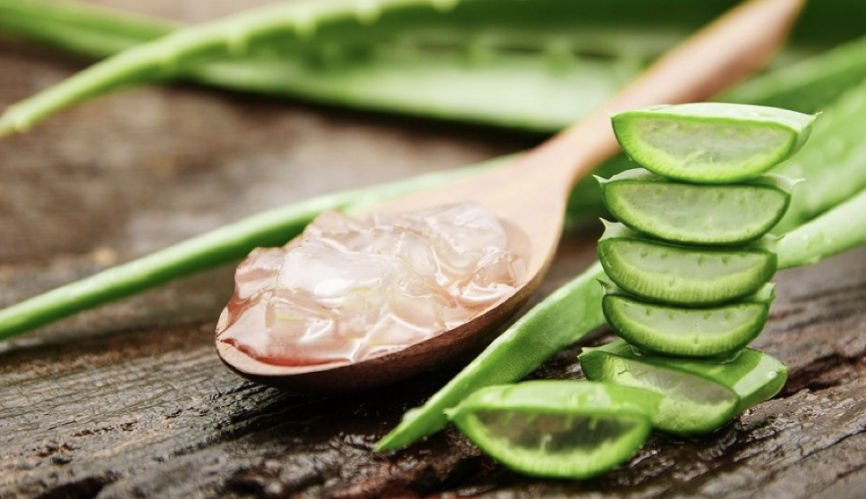 What Is Aloe Vera Extract Used For, What Is Aloe Vera Extract, What Is Aloe Vera, Aloe Vera, Aloe Vera Extract