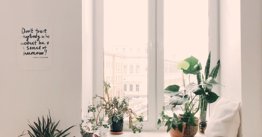 Attractive Window with plants